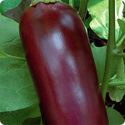 Семена Баклажан Ночной мотылек, 0,3 г, Урожай удачи