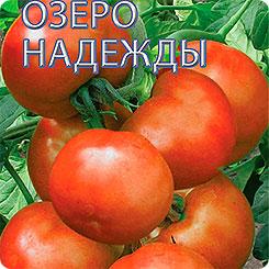 Семена Томат Озеро Надежды F1, 15 шт, Селекционер