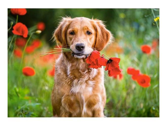 Пазл Castorland Цветы для Вас 180 деталей