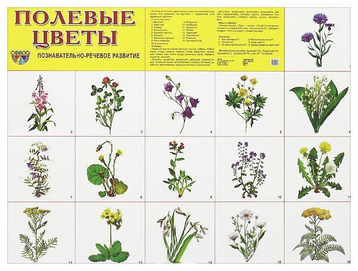 что цветы и травы картинки с названиями тригонометрическая