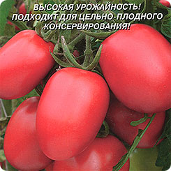 ПЛАЗМАС 137796
