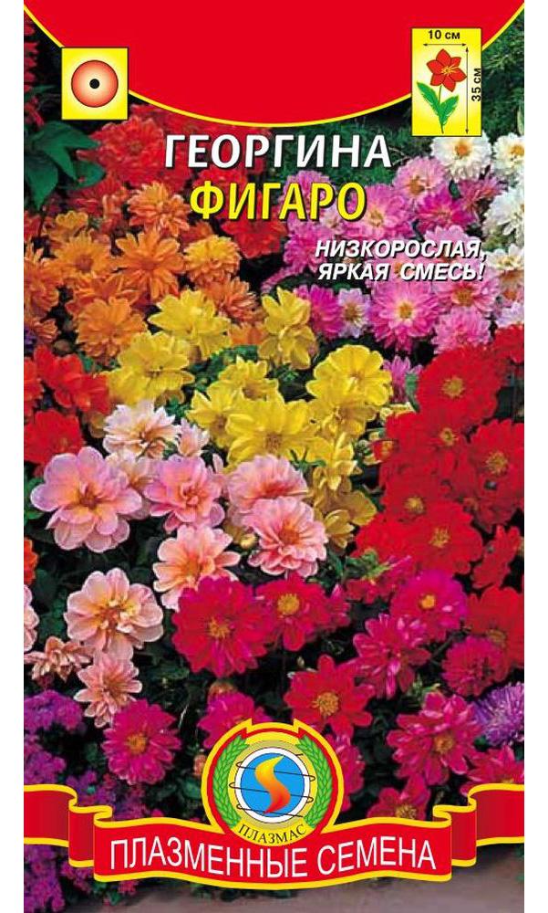 Семена Георгина махровая Фигаро, Смесь, 11 шт, Плазмас