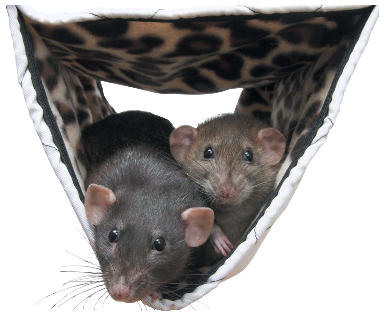 Гамак для хорьков, крыс Savic закрытый нейлон
