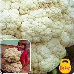 Семена Капуста цветная, 50 шт, Русский огород