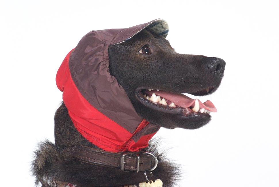 Шапка для собак ТУЗИК унисекс, красный, длина спины см