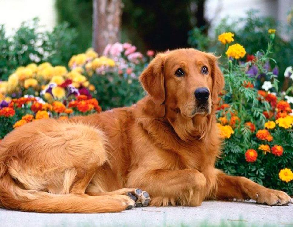 Фото картинок с собаками