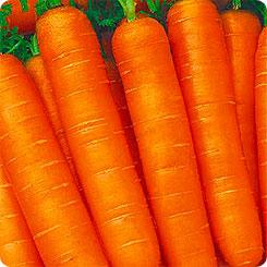 Семена Морковь Соната, 1 г, Семена Алтая