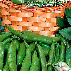 Семена Бобы Русские Черные, 5 шт, Плазмас