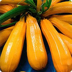 Семена Кабачок цуккини Самый-самый, 1 г, АЭЛИТА