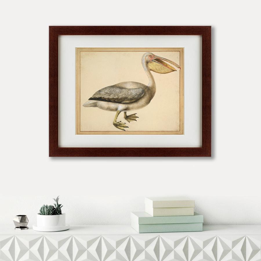 Литография A European Pelican, 1635г., 52 x 42 см, Картины в Квартиру фото