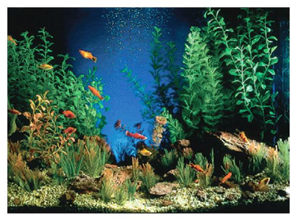 Фон для аквариума Penn Plax камни 50x100