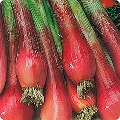 Семена Лук на зелень Красная стрела, 0,2 г, Плазмас