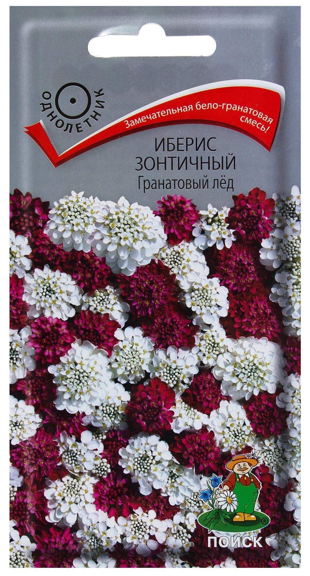 Семена Иберис зонтичный Гранатовый лед, Смесь, 0,1 г Поиск