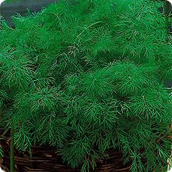 Семена Укроп Данди, 760 шт, Дом семян