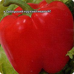 Семена Перец сладкий Квадро Ред, 15