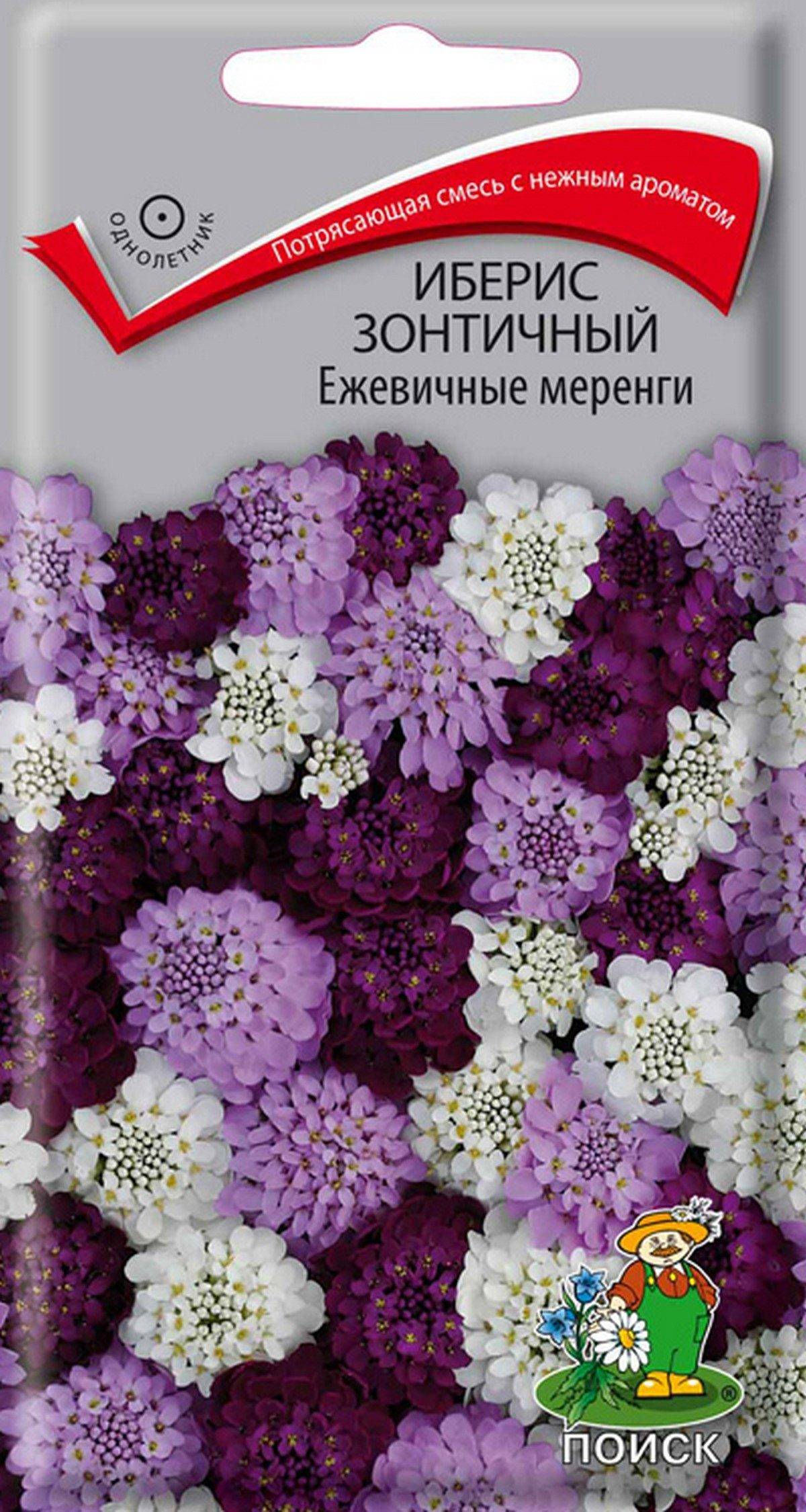 Семена Иберис зонтичный Ежевичные меренги, Смесь, 0,1 г Поиск
