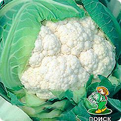 Семена Капуста цветная Гудман, 30 шт, Поиск