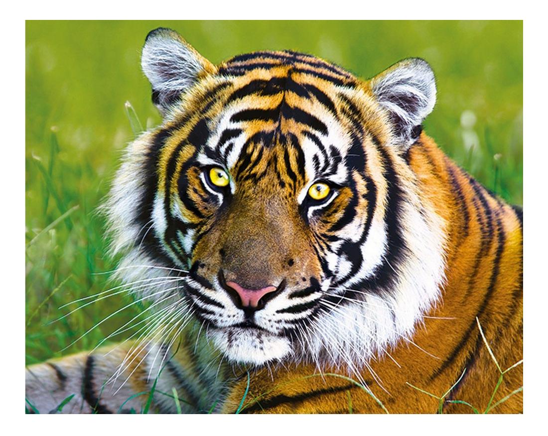 Пазлы Trefl Тигр, 500 деталей