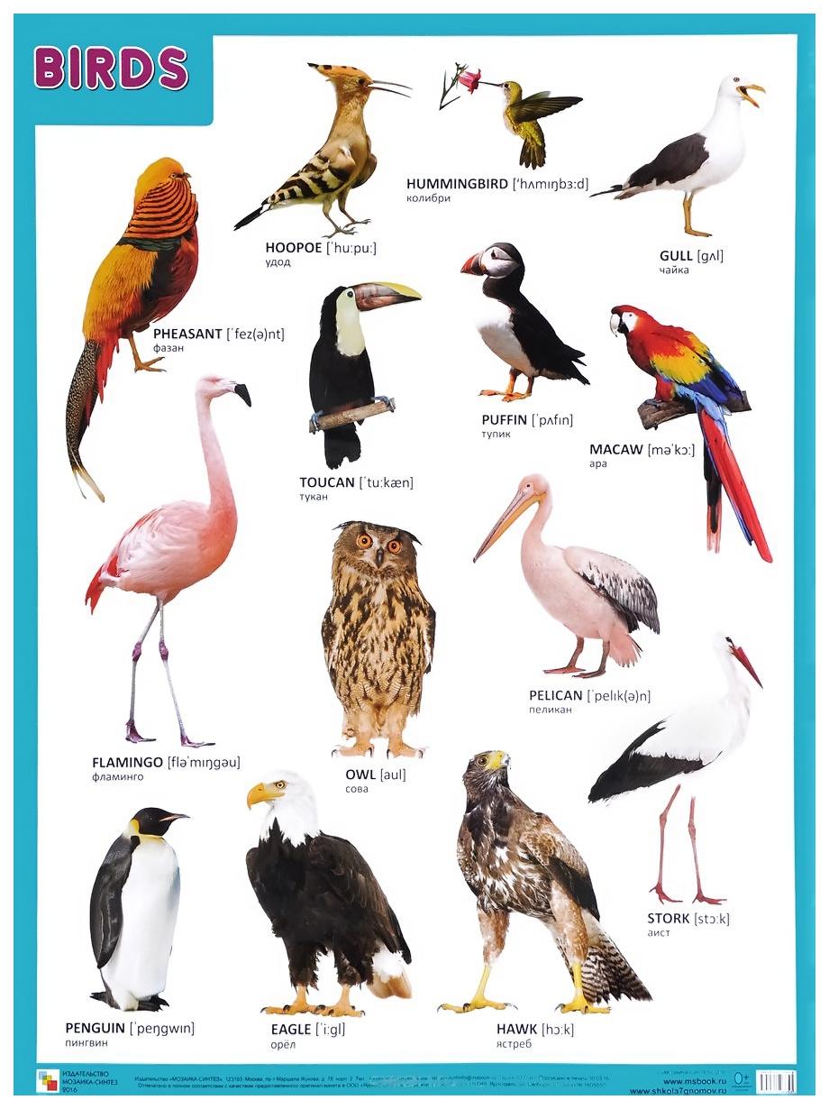 Купить Плакат Птицы, Мозаика-Синтез, Подготовка к школе