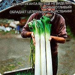 Семена Лук порей Сибирский Великан, 0,25
