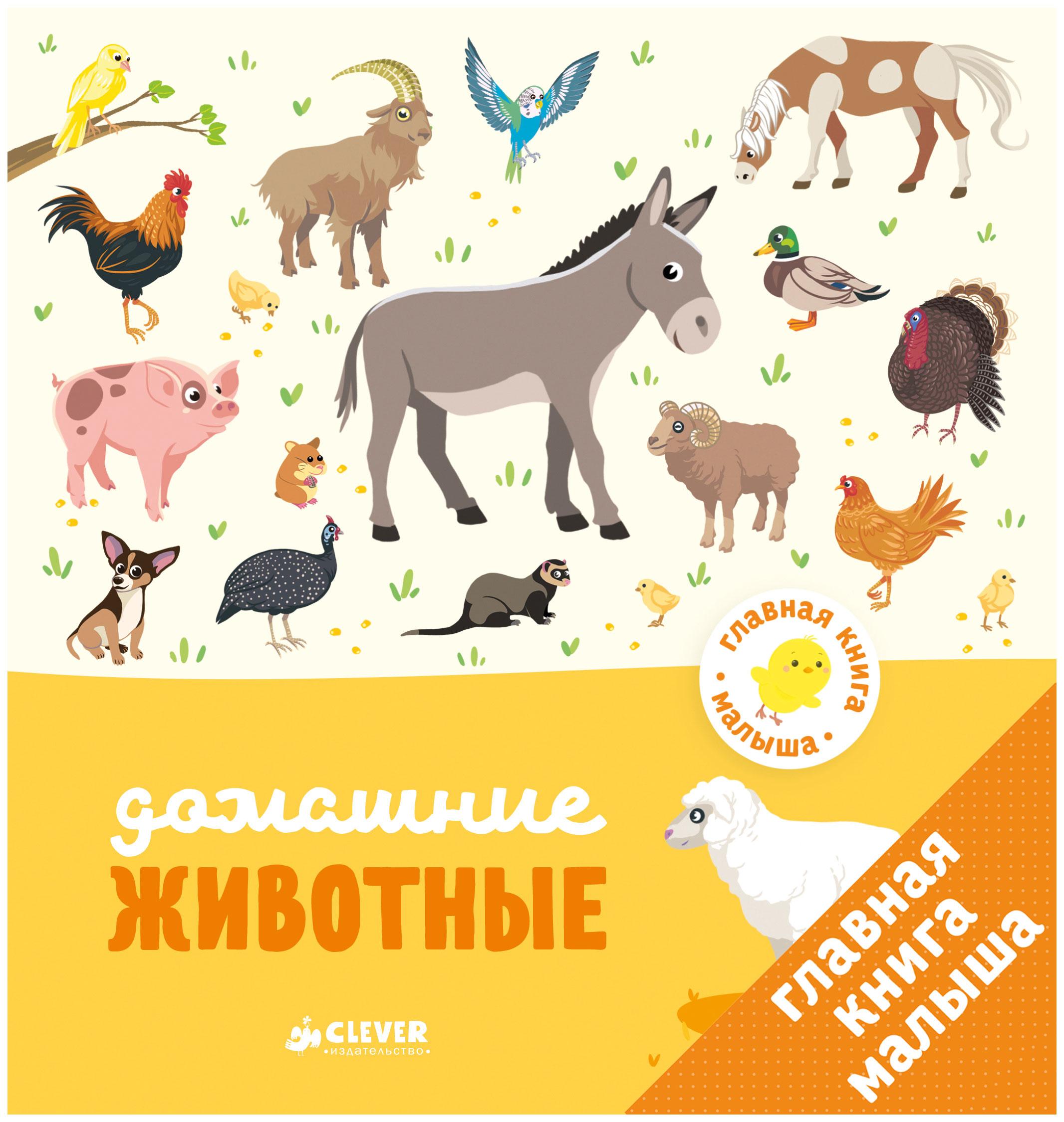 Книга клевер Агнес Бессон Главная книга Малыша Домашние Животные фото