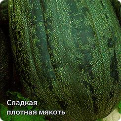 Семена Тыква твердокорая Грибовская кустовая 189, 10 шт, Поиск