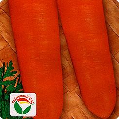 Семена Морковь Сентябрина, 2