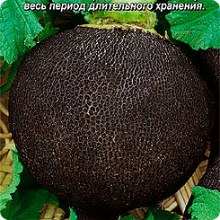 Семена Редька Черноморочка, 1 г, АЭЛИТА