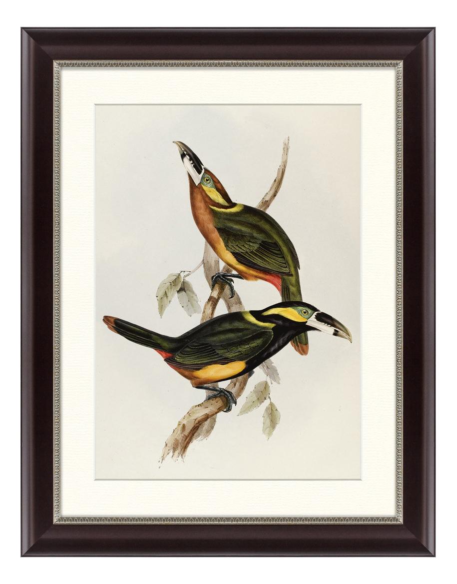 Картина Картины в Квартиру Экзотические виды птиц 47 х 60 см фото