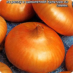 Семена Лук репчатый Феодал, 0,5 г, АЭЛИТА