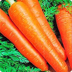 Семена Морковь Сиркана F1, 190 шт, Дом семян