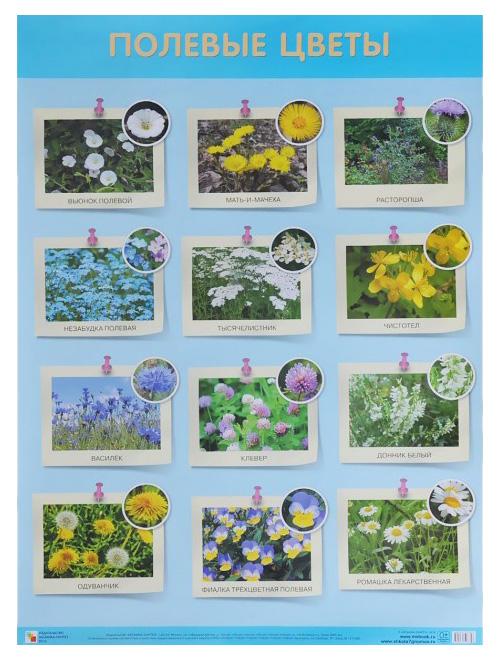 Купить Плакат Полевые цветы, Мозаика-Синтез, Подготовка к школе