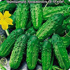 Семена Огурец Мечта дачника F1, 10 шт, АЭЛИТА 56010 по цене 35