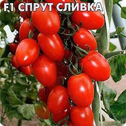 Семена Томат Спрут Сливка F1, 0,03 г, СеДеК