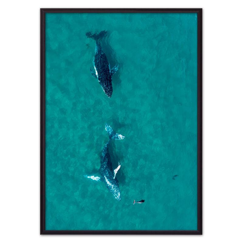 Постер в рамке Дельфины 30 х 40 см Дом Корлеоне