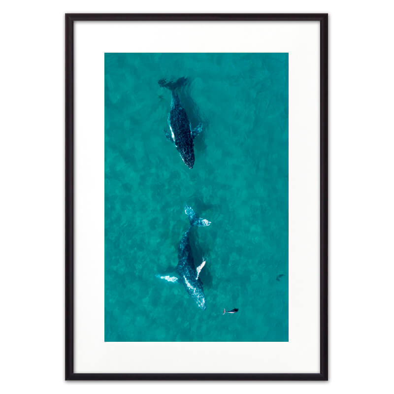 Постер в рамке Дельфины 40 х 60 см Дом Корлеоне