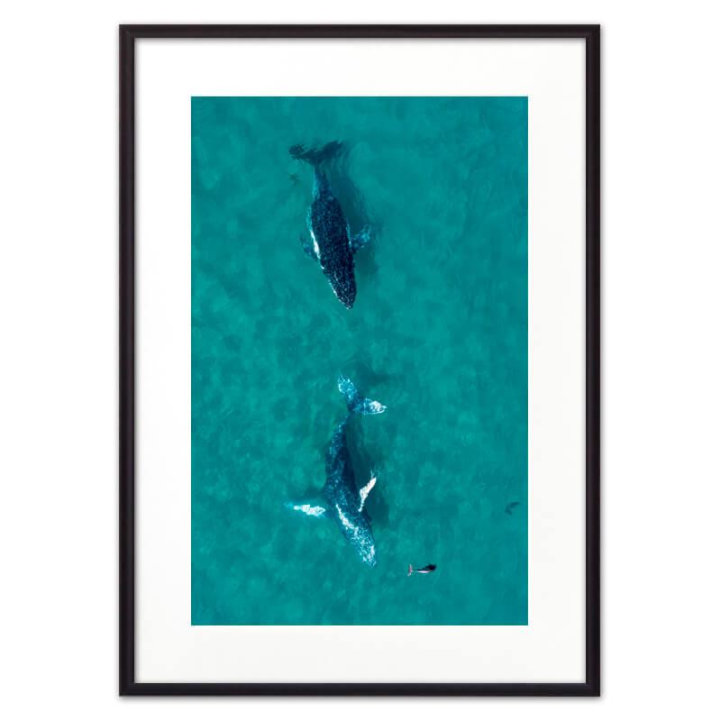 Постер в рамке Дельфины 50 х 70 см Дом Корлеоне