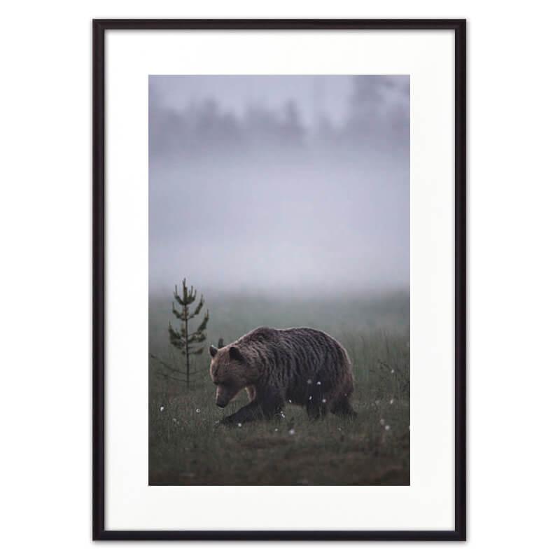 Постер в рамке Медведь 50х70 см