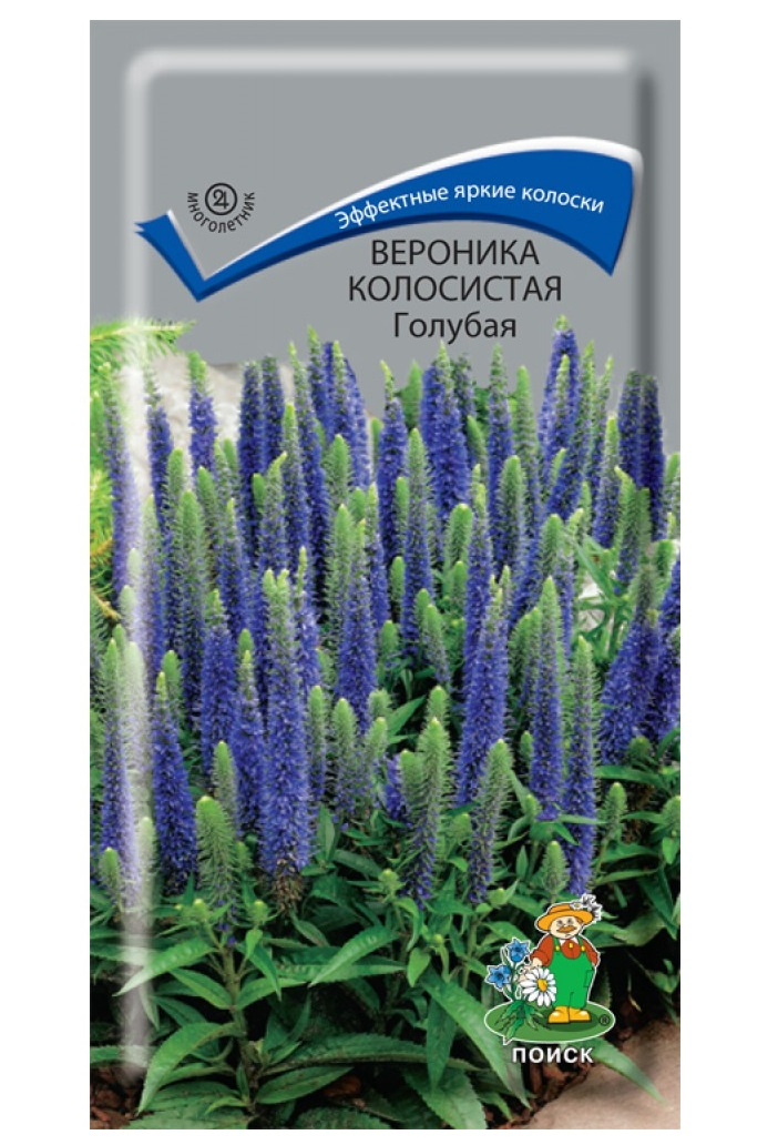 Семена Вероника колосистая Голубая, 0,1 г ПО Поиск фото