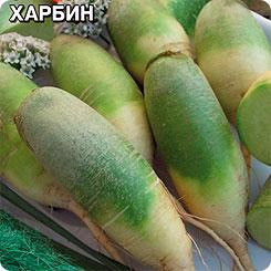 Семена Редька китайская (лоба) Харбин, 1