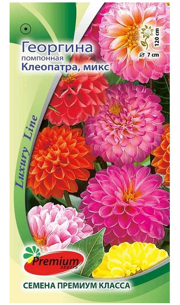 Семена Георгина помпонная Клеопатра, Смесь, 0,1 г Luxury Line Premium seeds