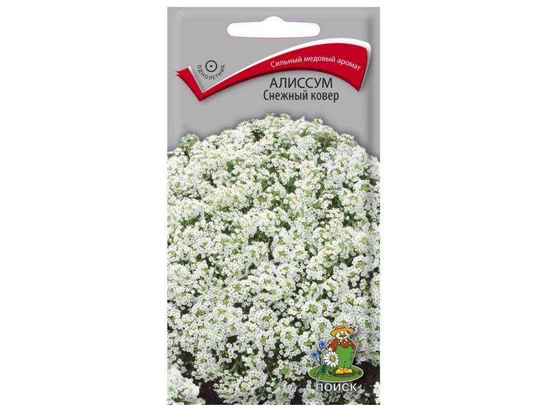 Семена Алиссум Снежный ковер, 0,3 г Поиск