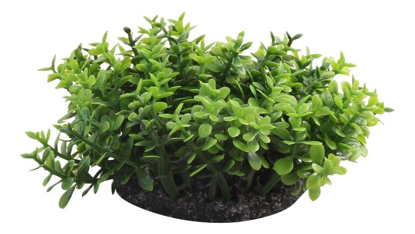 Растение аквариумное Микрантемум, 5 см, 3 ветки