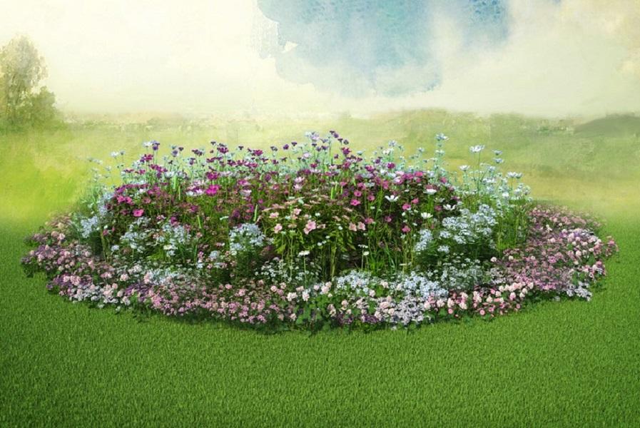 Семена выкройки для клумбы Красота Садовая 4 Бело-розовый зефир Красота Садовая фото