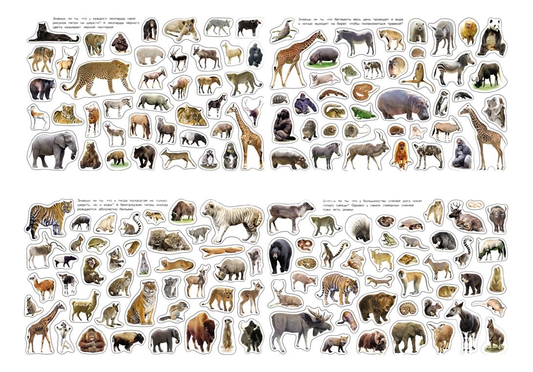 Купить Дикие животные, Книжка-Игрушка Росмэн Дикие Животные, Книги по обучению и развитию детей