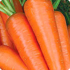 Семена Морковь Абледо F1, 400 шт, Агрос