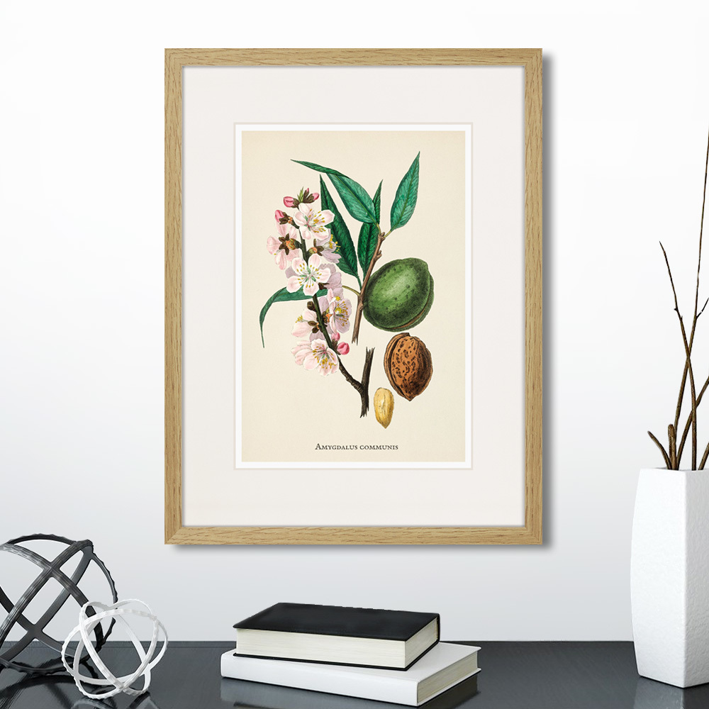 постеры для интерьера ботаника припомнит летописец