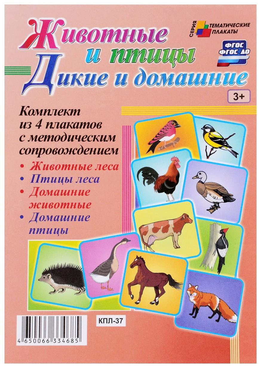 Комплект плакатов Дикие и домашние животные и птицы (4 плаката Животные леса, Птицы леса, Учитель-Канц