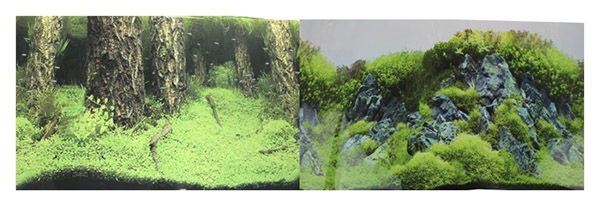 Фон для аквариума Prime Затопленный лес/Камни с растениями 30х60см фото