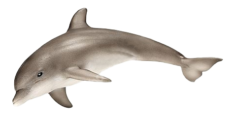 Фигурка животного Schleich Дельфин